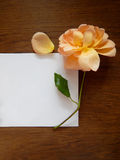 English rose and blank card for text on wood Stock Photography