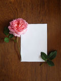 English rose and blank card for text on wood Royalty Free Stock Images
