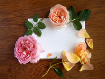 English rose and blank card for text on wood Stock Images
