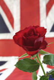 English Rose with Union Jack. Red rose close-up with soft blur Union Jack in background Royalty Free Stock Image