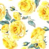 English Rosescan Flower Be Used For Wallpaper Pattern Fills Web Page Backgro Stock Photo