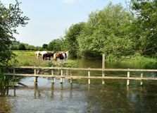 English Rural Landscape. Horses Grazing on the Banks of the River Chess in England Royalty Free Stock Photography