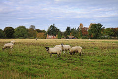An English Rural Landscape in Autumn Stock Images