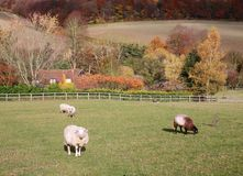 An English Rural Landscape in Autumn Royalty Free Stock Images