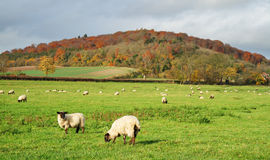 An English Rural Landscape in Autumn Stock Photos