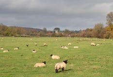 An English Rural Landscape in Autumn Stock Photos