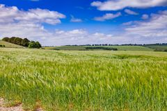 English rural landscape with barley field. English rural landscape with green barley field in Southern England UK Stock Images