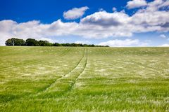 English rural landscape with barley field. English rural landscape with green barley field in Southern England UK Royalty Free Stock Photo