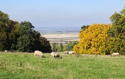 An English Rural Landscape in the Chiltern Hills Royalty Free Stock Photos