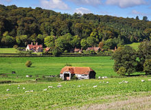 An English Rural Landscape with Hamlet. An English Rural Landscape with grazing Sheep and Hamlet in the distance Stock Image
