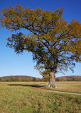 An English Rural Landscape with lone Oak tree Stock Images
