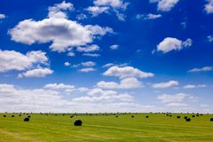 Summer rural landscape with silage bales on a field in Southern Royalty Free Stock Photo