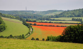 An English Rural Landscape of Red Poppy fields Stock Photos