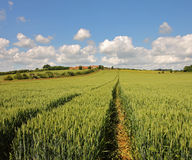 An English Rural Landscape of ripening Wheat Royalty Free Stock Photography