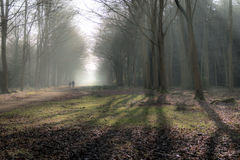 English scenic landscape in the morning at Felbrigg, Norfolk Royalty Free Stock Photos