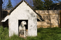 English Setter. Sitting in a weathered dog house Stock Image