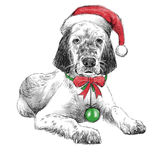 English setter with christmas hat Stock Photo