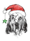English setter with santa claus hat Stock Photos