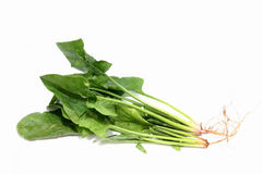 English spinach Stock Image