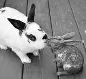 English Spotted rabbit. Kissing a rabbit statuette Royalty Free Stock Images