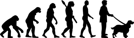 English Springer Spaniel evolution. Development with silhouette Royalty Free Stock Image