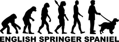 English Springer Spaniel evolution word. English Springer Spaniel evolution with word in black Stock Images