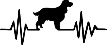 English Springer Spaniel heartbeat. Heartbeat pulse line with English Springer Spaniel silhouette Royalty Free Stock Images