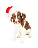 English Springer Spaniel Santa Puppy Royalty Free Stock Images