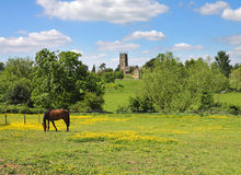 An English Summer Landscape in the Cotswolds with grazing horse Royalty Free Stock Photo
