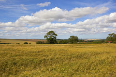 English summer landscape with golden barley fields. A traditional english farming landscape with golden barley fields and a village under a blue summer sky in Royalty Free Stock Photos