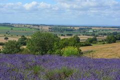 English summer landscape with lavender and the Vale of York, UK royalty free stock images