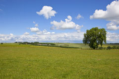 English summer landscape Royalty Free Stock Image