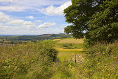 English summer landscape Stock Image