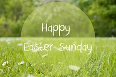 Gras Meadow, Daisy Flowers, Text Happy Easter Sunday Stock Photo