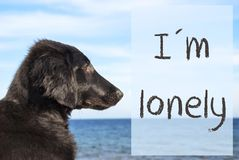 Dog At Ocean, Text I Am Lonely Stock Photo