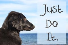 Dog At Ocean, Text Just Do It Stock Images