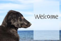 Dog At Ocean, Text Welcome Royalty Free Stock Photos