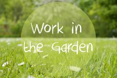 Gras Meadow, Daisy Flowers, Text Work In The Garden Stock Images