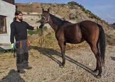 English thoroughbred racehorse in box 06. English thoroughbred racehorse in box at ZOO Bor, Serbia, hippodrome, photo taken 23.10.2013 Stock Photo
