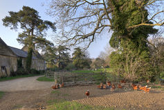 English village with farm and chickens Royalty Free Stock Photos
