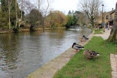 English village river with ducks landscape Stock Photo