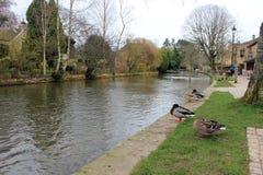 English village river with ducks landscape Stock Photos