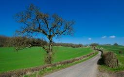 English Village Road. Village road on spring day royalty free stock image