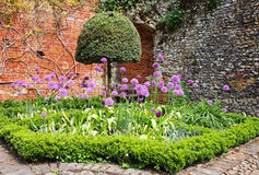 An English Walled Garden. A corner of an english Walled garden with Purple Aliums Stock Photography