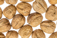 English walnuts on white background Stock Photo