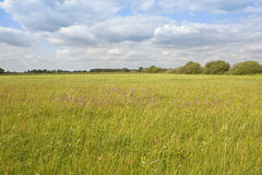 English water meadow Stock Images