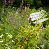 English wild garden Stock Photography