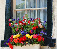 English Window Flower Box. A beautiful English Flower Box adds such colour and beauty to the window of an old English House. Red, yellow, purple, green, white Royalty Free Stock Photo