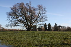 English Winter Landscape. Landscape with green grass and leafless tree. In the background an ancient parish church is visible. Photograph was taken in Royalty Free Stock Photos