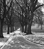 English winter park. Snowing in the park on a very cold winters day, snowflakes in the air create a beautiful mistyness Royalty Free Stock Image